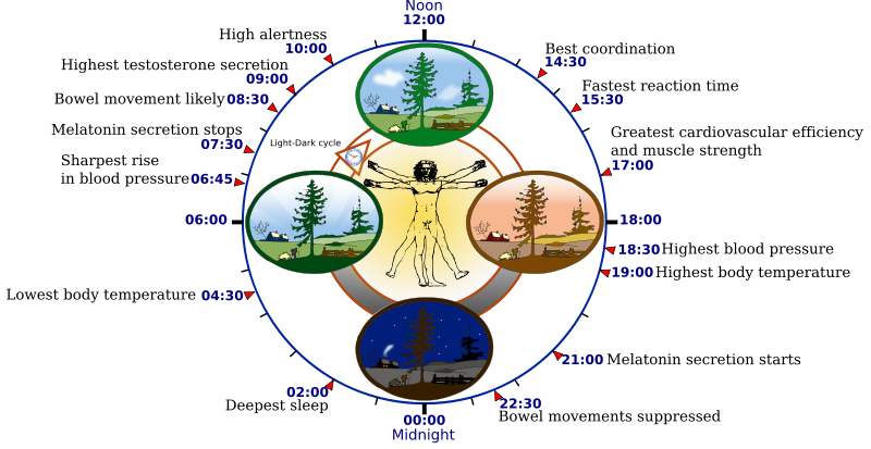 Some features of the human circadian biological clock